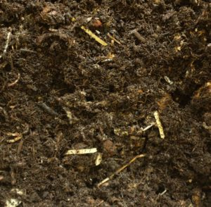 So sehen Bioabfälle nach drei Wochen in der Wurmkiste aus. Fotocredit: wurmkiste.at