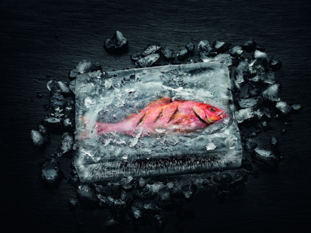 Miele Dialoggarar - Fisch in Eisblock gegart; Foto: Miele